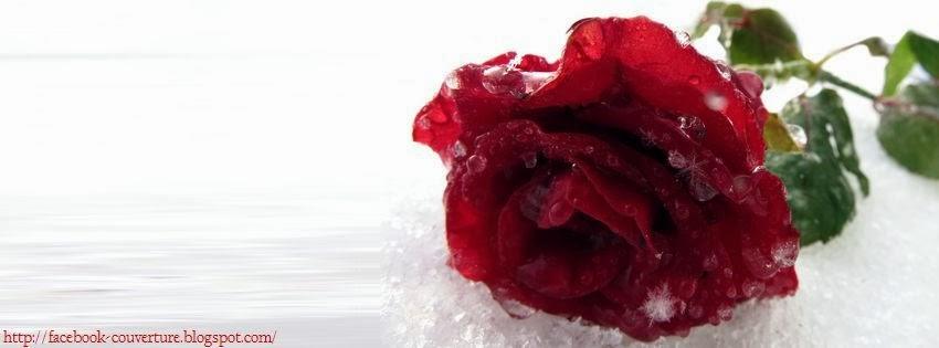 Photo De Couverture Fleur Rose Idee D Image De Fleur