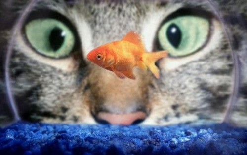 Photo trick funny cats with glasses for Moving fish for cats