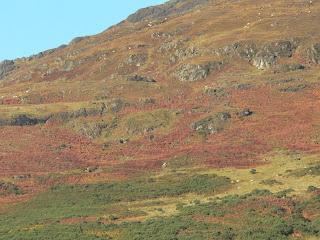 hillside ireland copyright kerry dexter