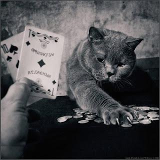 la chatte au poker