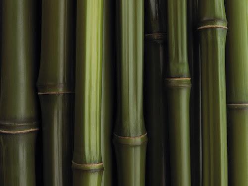 Gambar-Gambar Hutan Bambu Baru