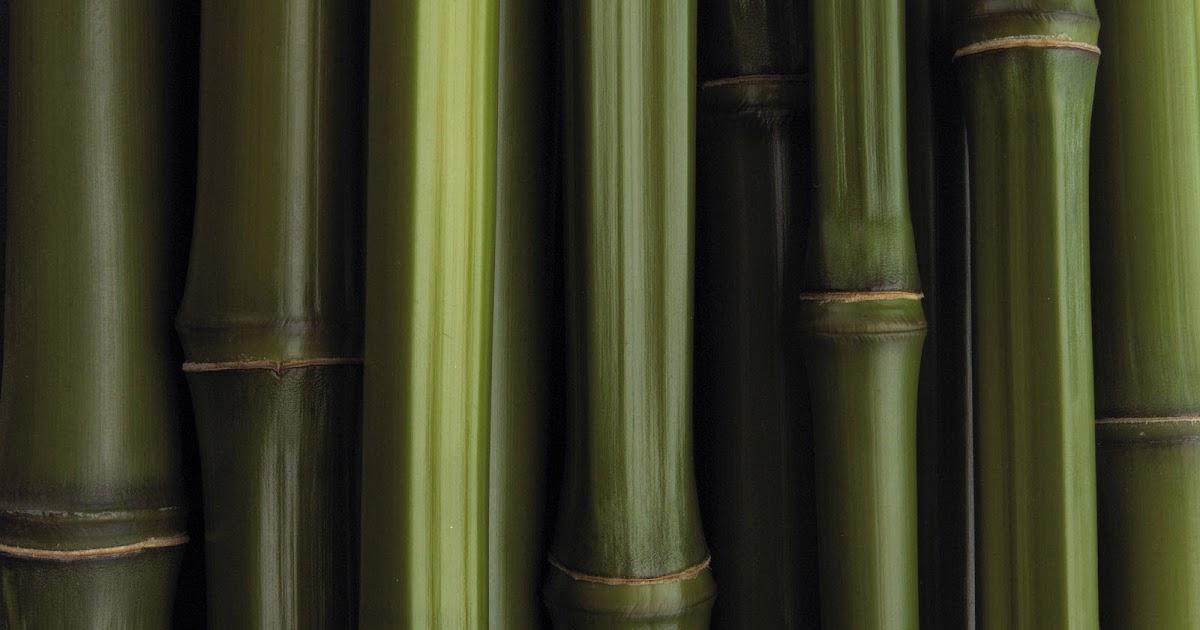 All New Wallpaper Gambar Gambar Corak Bambu Hutan Bambu