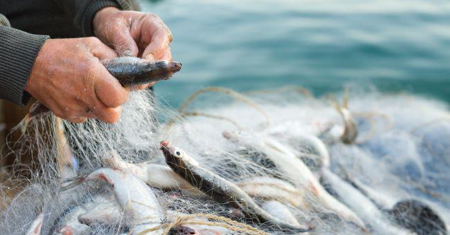 Russo che pesca 3 7 vivaio konstantinovo triade