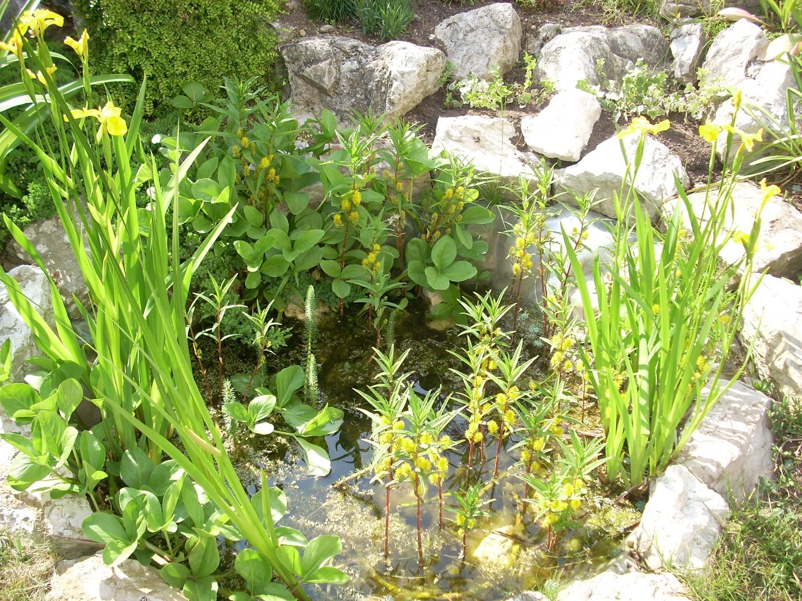 Coltivando fra fornelli e monelli verde che passione for Laghetto giardino zanzare
