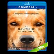 La razón de estar contigo (2017) BRRip 720p Audio Dual Latino-Ingles