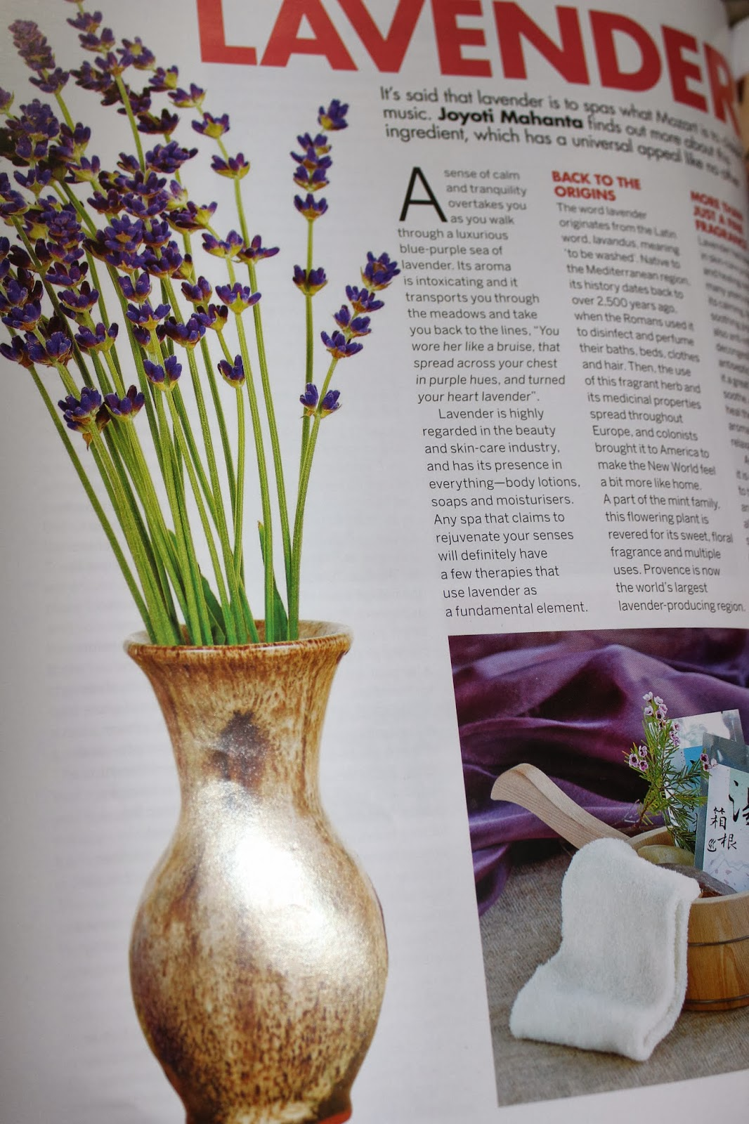 All About Lavender - Femina Salon and Spa