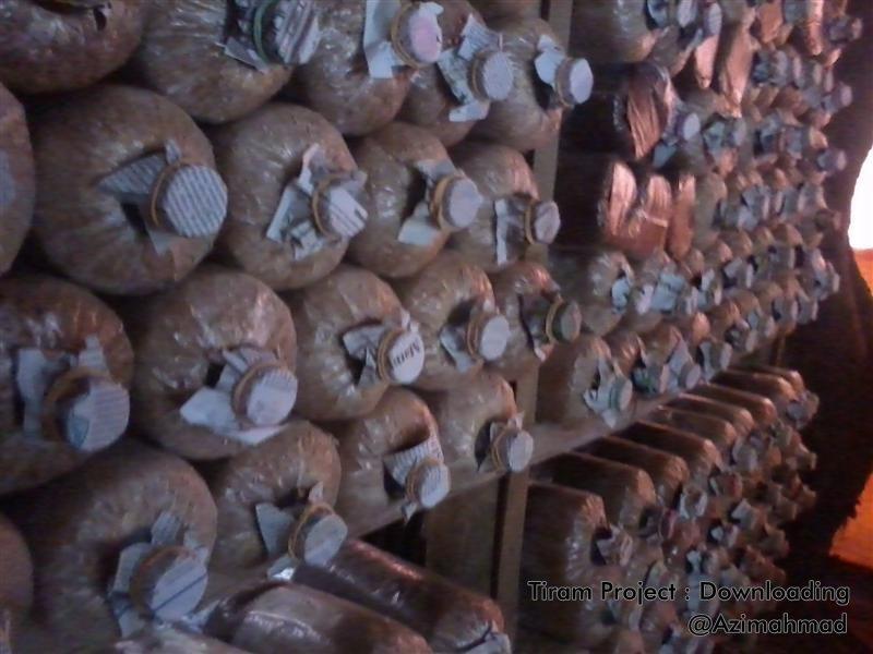 Gambar Jamur Tiram, Budidaya Jamur Tiram.