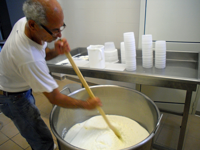 ... /cheese master, Domenico, stirring the curds for the summer cheese