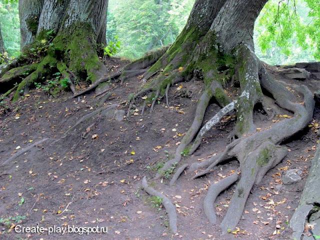 гигантские корни дерева
