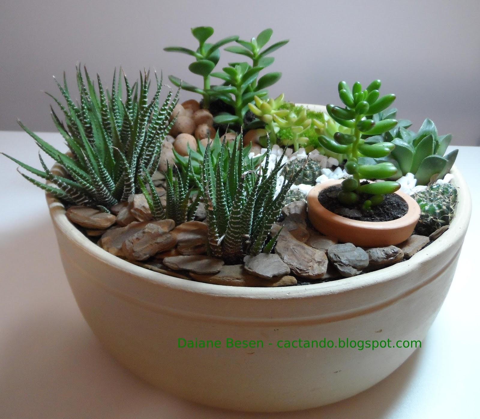 mini jardins no vidro:Demorou mas fiz um mini jardim em um vaso de cerâmica! Não podia