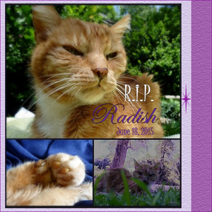 Rest In Peace Radish