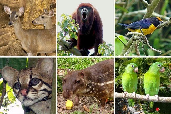 Resultado de imagen para amazonia imagenes