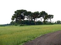 Camps i boscos al Pla de la Sauleda