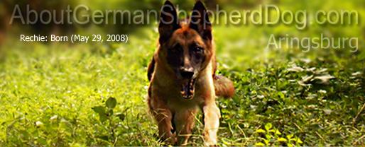 http://welcomedoglovers.blogspot.com/2015/06/dog-behavior-problem-over-excitement.html