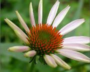 Wallpapers de Flores. Haz Click en las Imagenes para ver el Tamaño Completo wallpapers flores