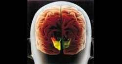 Βλέπουμε μόνο χάρη στα μάτια μας; Το μυστήριο της αόμματης όρασης - Νευροεπιστήμη, αντίληψη