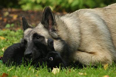 koira ja kani