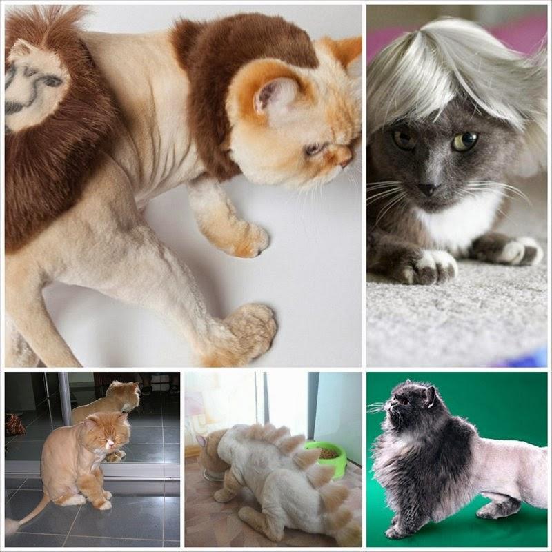 Стрижка кошки своими руками 7