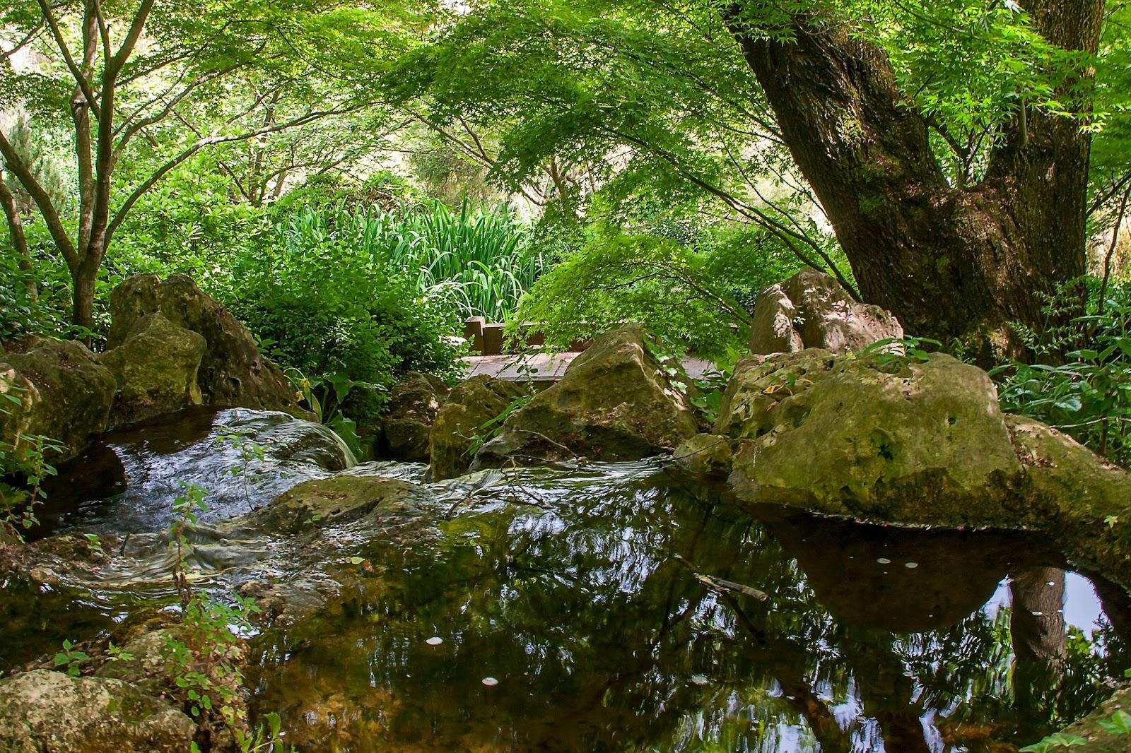 Fotografare i dintorni di roma orto botanico roma for Laghetti nei giardini