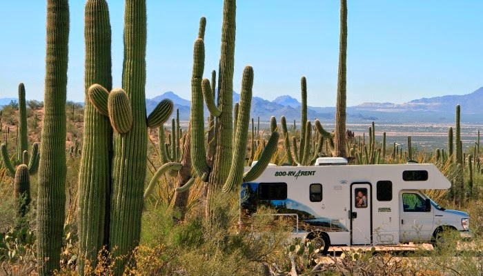 Saguaro National Park i Arizona