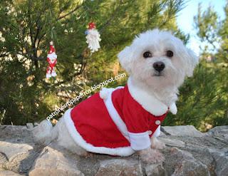 vestido navidad perro