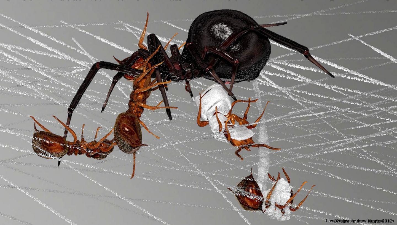 Red Ants Vs Black Ants Size 1600x900 27985