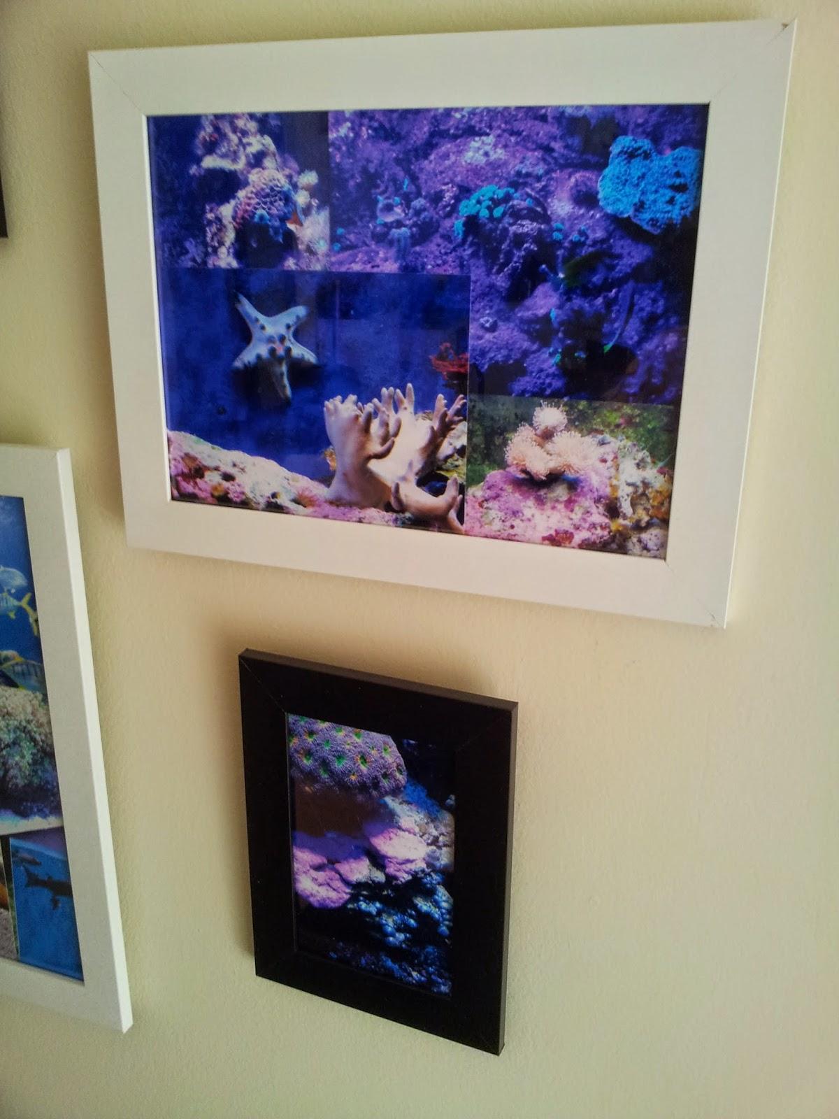diy-cadre-aquarium-déco-coraux