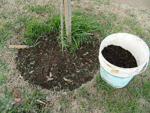 Jardiner a pampeana tareas para agosto mes del rbol - Tareas de jardineria ...