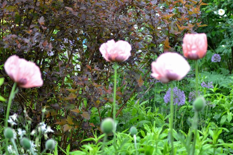 Renates trädgård