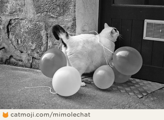 Фото 6 из Catmoji - социальная сеть для котов