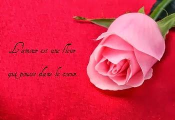 Exemples lettre d'amour avec des fleurs
