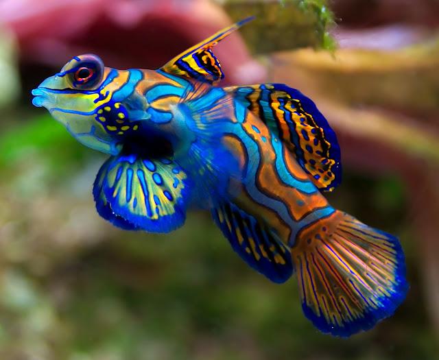 Ikan Ikan Cantik yang Penuh Warna