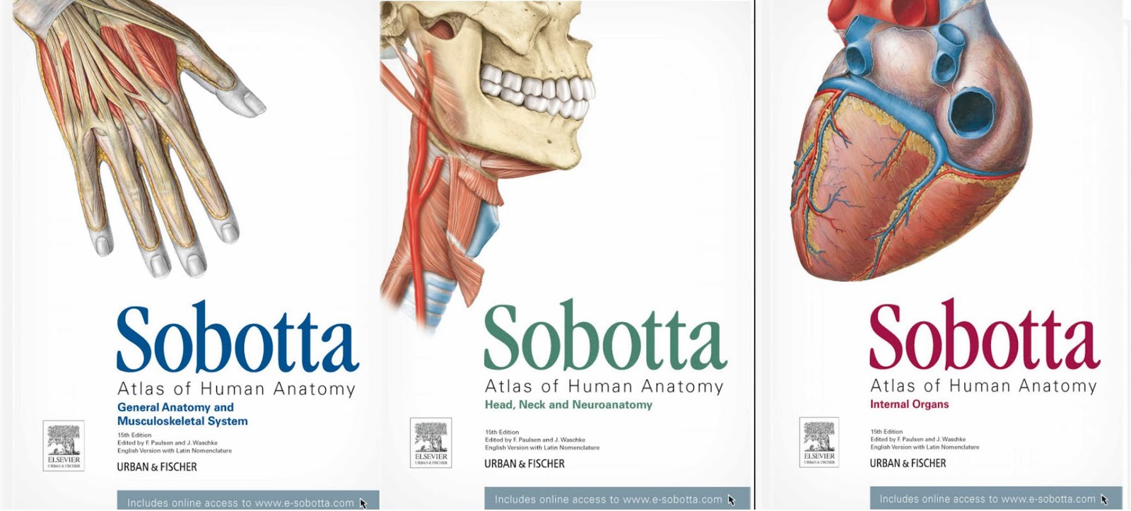 Download Sobotta Atlas of Human Anatomy 15th Edition (English Edition)