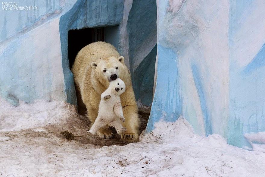 animales con sus bebes