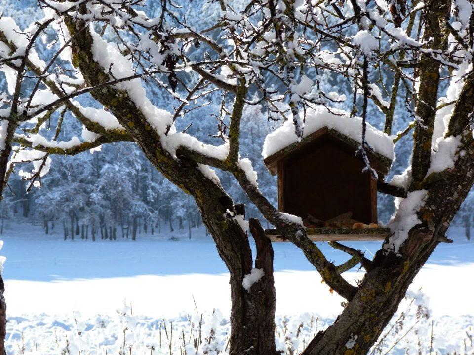 neige, cabane a oiseau, hautes alpes, montagne