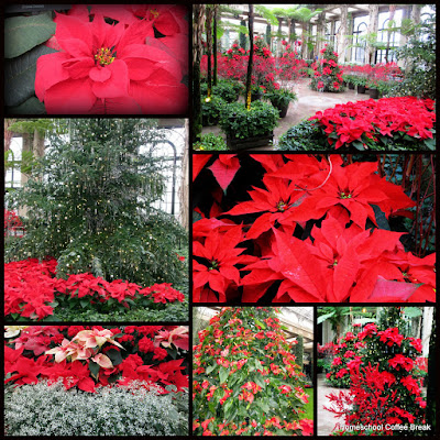 Poinsettias - A Longwood Gardens PhotoJournal, Part One on Homeschool Coffee Break @ kympossibleblog.blogspot.com