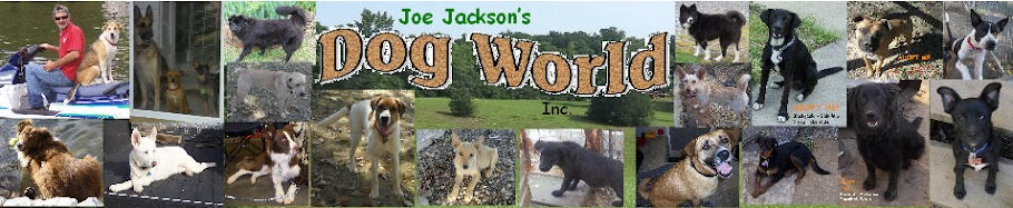 JOE JACKSONS  DOG WORLD INC.