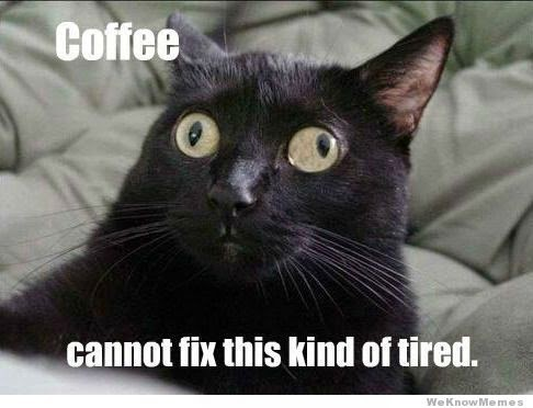 coffee-cat-tired