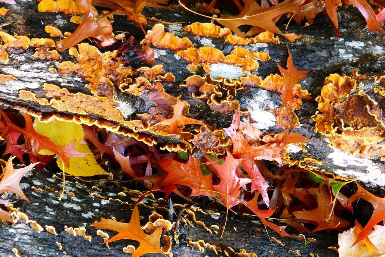 Eugene, oregon, garden, autumn, fall, Under The Plum Blossom Tree, winter, rain