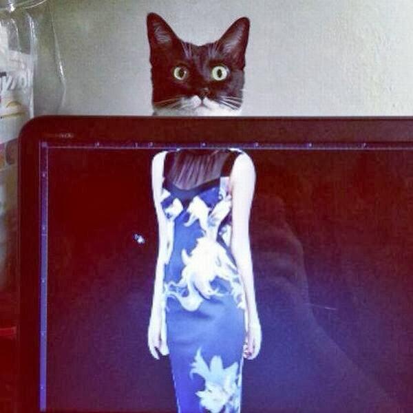 Funny cats - part 79 (35 pics + 10 gifs), funny cat