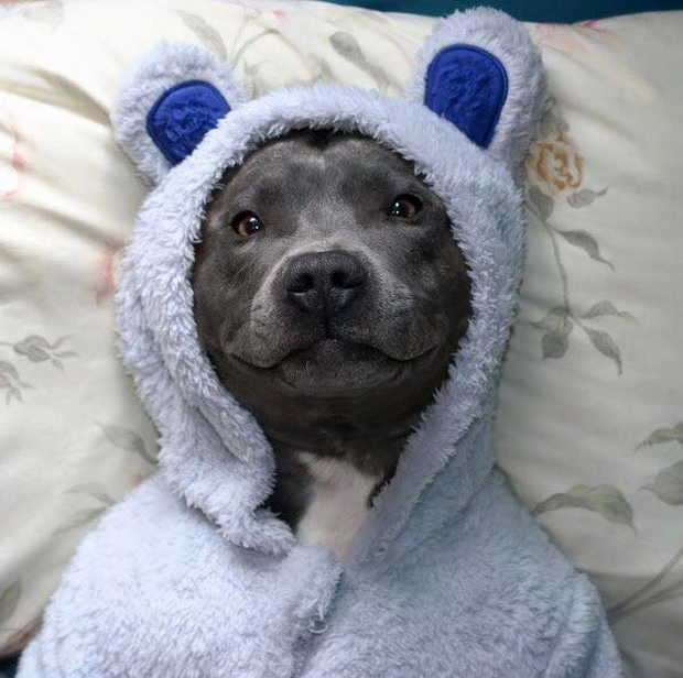 Cute dogs - part 93, cute dog photo, puppy pictures, adorable dogs, funny dogs