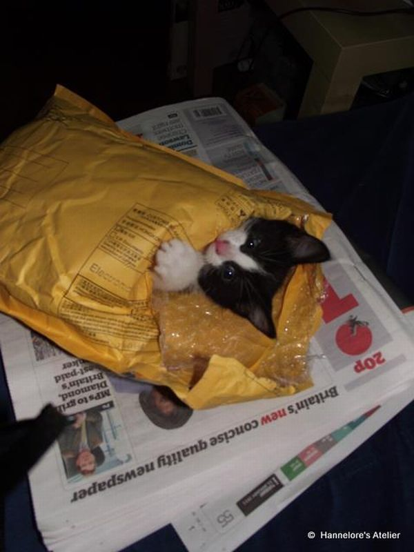 funny cats, cute cat pictures, kitten playing with envelope