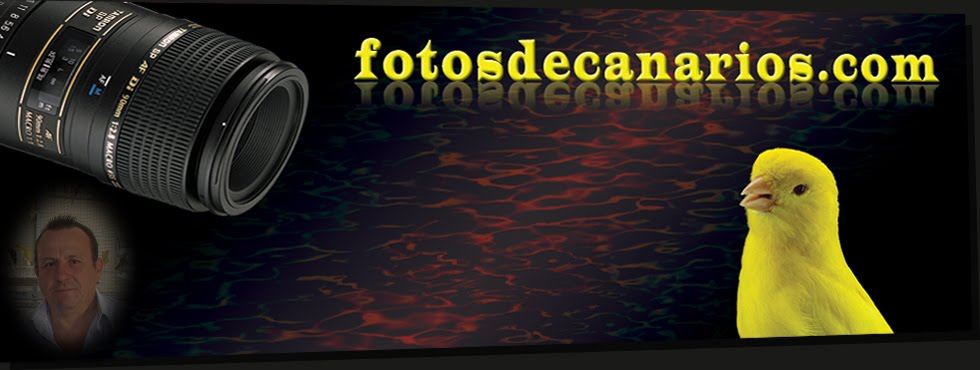 fotosdecanarios.com blog