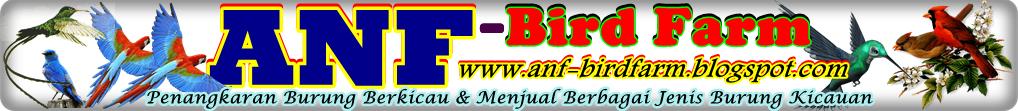 ANF BIRD FARM - PENANGKARAN BURUNG BERKICAU + MENJUAL BERBAGAI JENIS BURUNG BERKICAU KUALITAS OK
