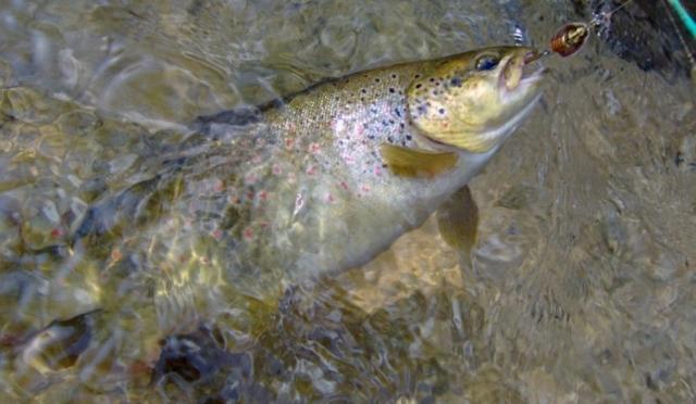 Fishing in turkey 2010 trout season final for Trout fishing season