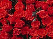 Los hombres cultivan 5000 rosas en un mismo jardín y no encuentran lo que . rosas