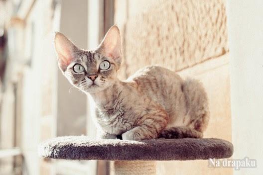 Drapak dla kota może się przydać!