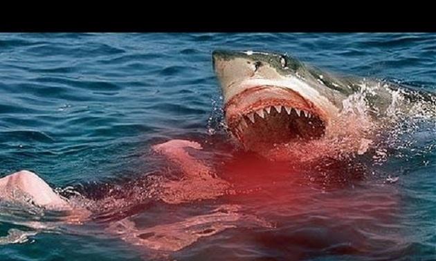 Ένα από τα μεγαλύτερα μυστήρια γύρω από τη ζωή του Λευκού Καρχαρία έλυσαν οι επιστήμονες [Βίντεο]