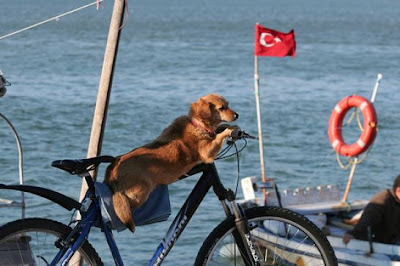 Dog Is Driving Bicycle
