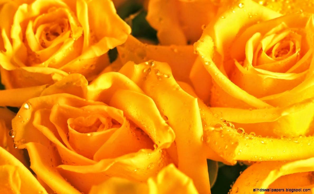Flowers Yellow Wallpaper Free Download